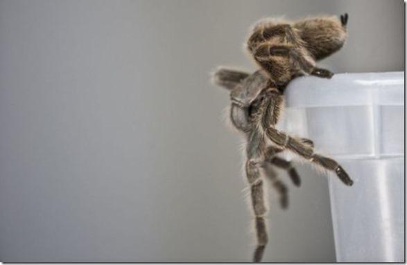 spider-farmer-juan-17