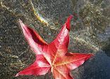 leaf-floating-on-water-zero-dean.jpg