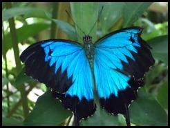 Australia, Kuranda Butterfly Park (5)