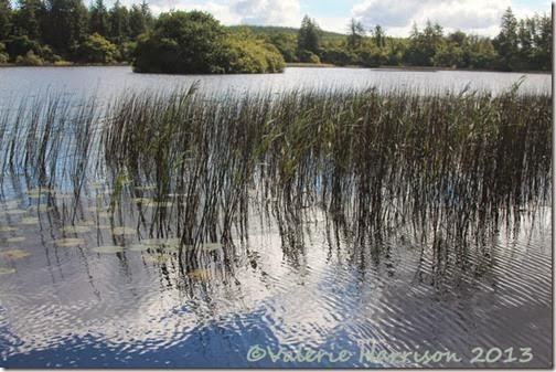 14-reeds