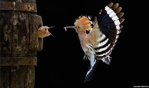 _58227984_giovannifrescura,italy,openshortlist,nature&wildlife,sonyworldphotographyawards2012