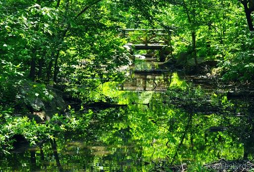 7. woodland bridge-DSC_0017