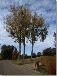 Deze bomen zullen binnenkort geveld worden