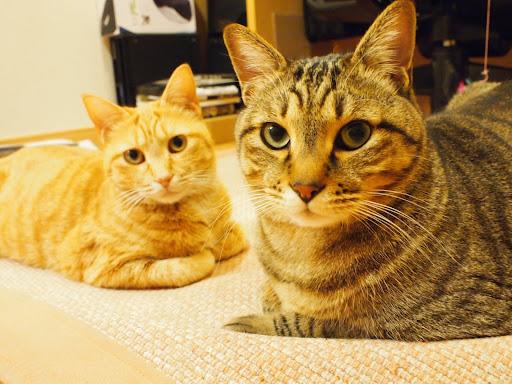 [写真]珍しく仲の良いグスタフとドーラ