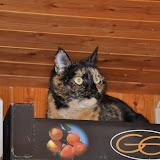 gatti 2012-9