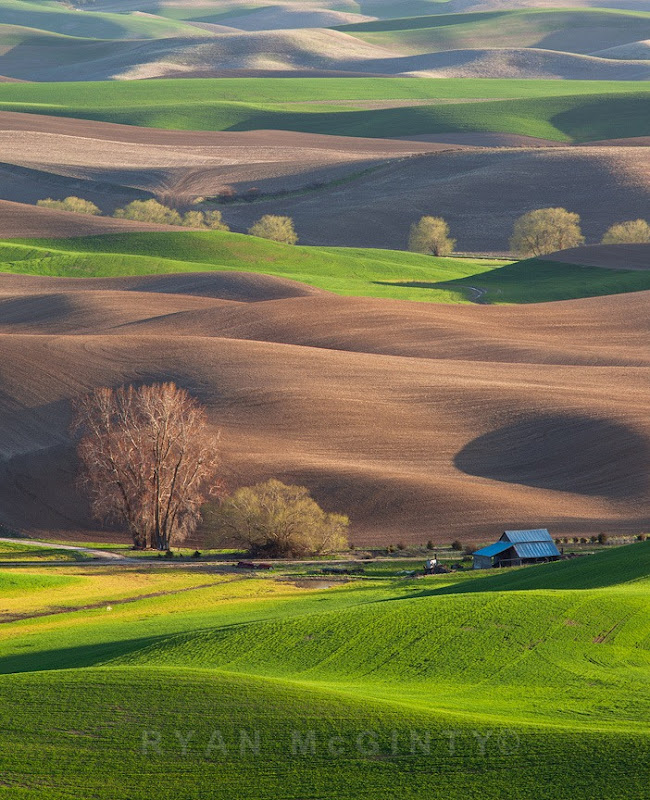 Palouse Afternoon Layer Cake
