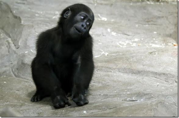 cute-baby-animals-37