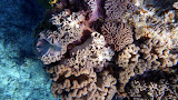 Inches Above The Coral Reef - Noumea, New Caledonia