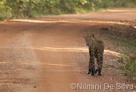 2012 12 14 Wilpattu (15 of 34)