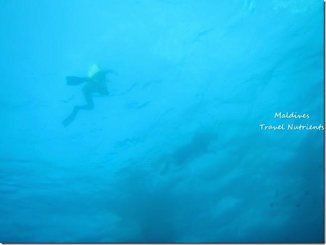 馬爾地夫 浮潛 (55)
