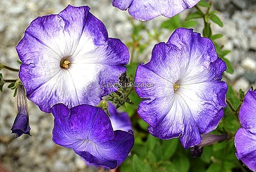 Azul - Glória Ishizaka 9