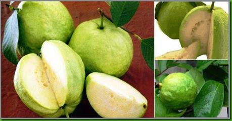 Cas Guava 3