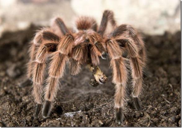 spider-farmer-juan-16