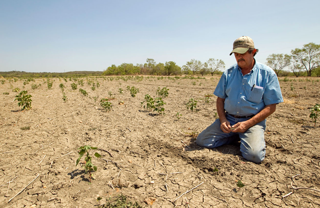 Terry Hash pauses after searching in the cracked soil for cotton seeds in his 175-acre cotton field in Garfield on Thursday, August 18, 2011. Hash planted 800 acres of cotton, corn, wheat and sorghum, and almost all of it was destroyed by the drought. Despite having insurance, Hash said he worries about how he is going to pay his farm loans and borrow more money for next season's crops. 'Lots of sleepless nights,' Hash said. 'You lay in bed wondering what the hell you're going to do.' Jay Janner / statesman.com