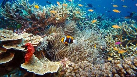 Embaixo do mar