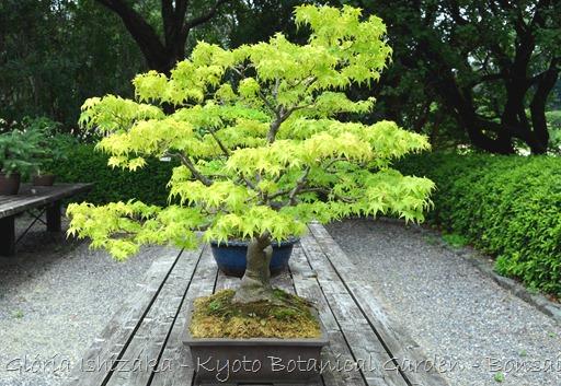 Glória Ishizaka -   Kyoto Botanical Garden 2012 - 42