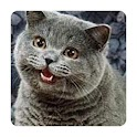 Random Lolcat (Donate) icon