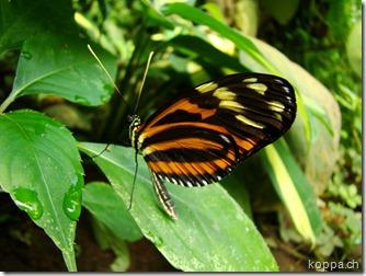 110528 X Schmetterlingsfarm (2)