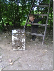Rojení  a velikost včelstva 239
