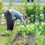 Så kan der høstes salatblade