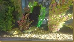 235 fish tnk