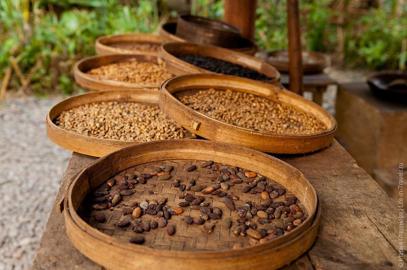Процесс сушки какао-бобов