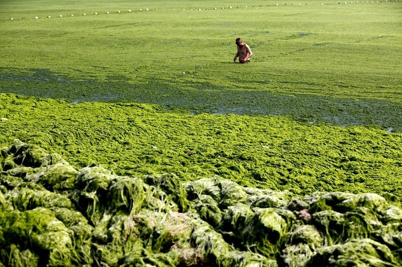 algae-china-beach-2