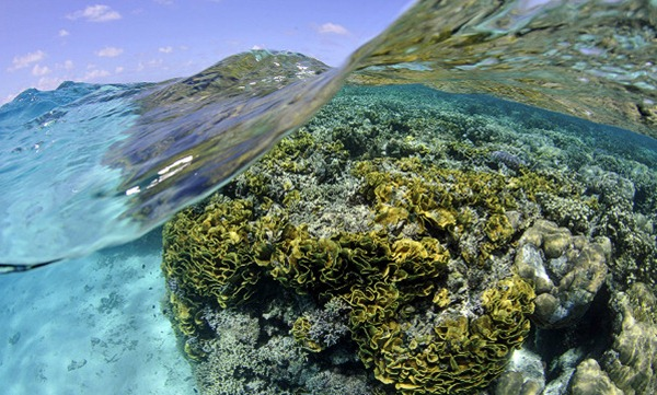 Coral reef, Federated States of Micronesia 01
