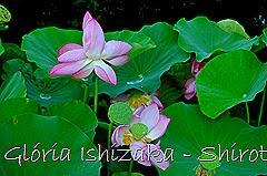 88 - Glória Ishizaka - Shirotori Garden