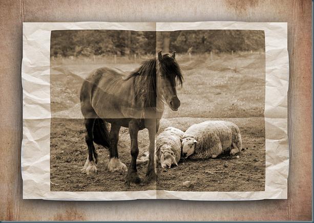folded horse