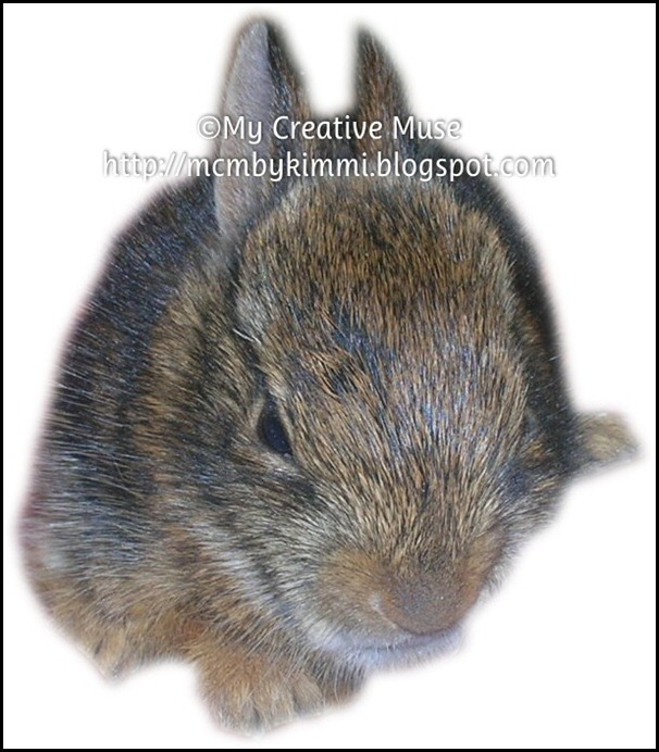 mcm-rabbit01