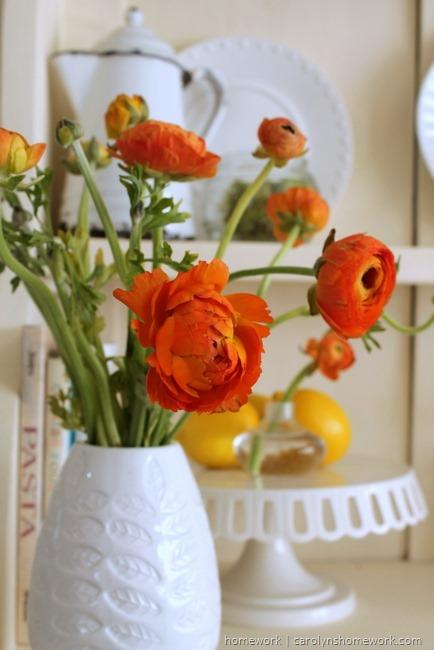 Springtime Ranunculas via homework | carolynshomework.com