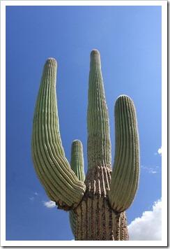 120729_SaguaroNP_044