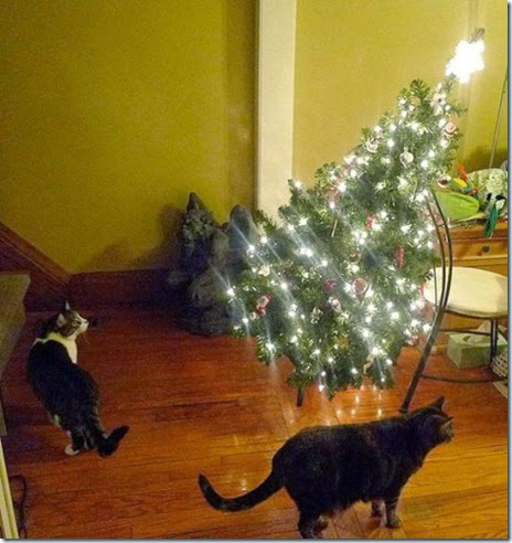 pets-hate-christmas-019