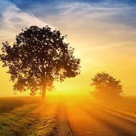 Sunrise Overture pt.IX. by Zsolt Zsigmond - Landscapes Sunsets & Sunrises ( clouds, sky, tree, fog, road, sunrise, light, mist,  )