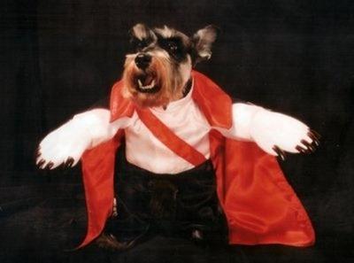 perros vampiro 1 (1)