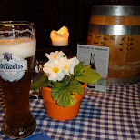 edelweiss at the klosterbrau in Seefeld, Tirol, Austria