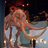 Houston Museum of Natural Science - 116_2651.JPG