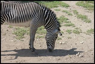 Zoo5 034