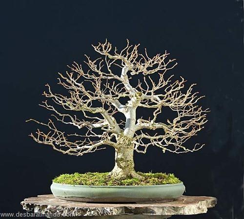 bonsais arvores em miniatura desbaratinando (35)