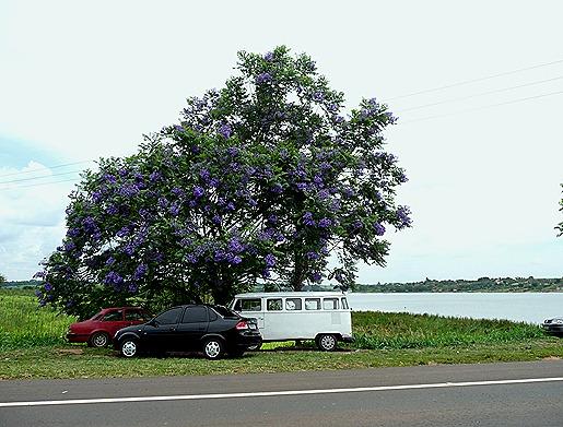Glória Ishizaka - Guaiçara -  rio dourado- jacaranda mimoso