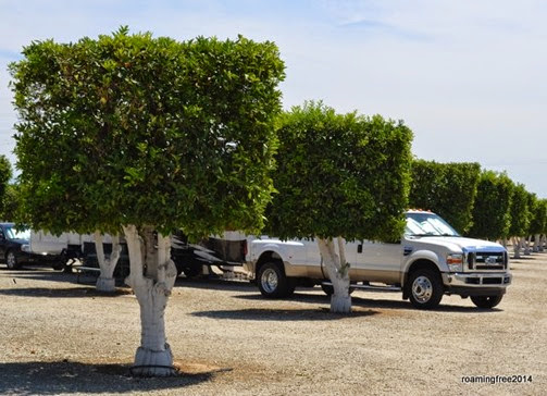 Orange Grove RV Park