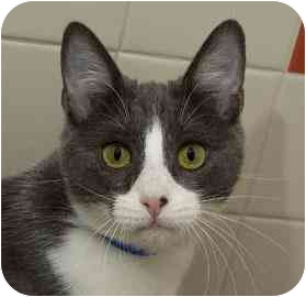 Wally is from the San Francisco SPCA. To learn more about Wally, click on the link to the shelter below.