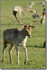 Bradgate Park D800 X14  27-10-2012 15-23-009