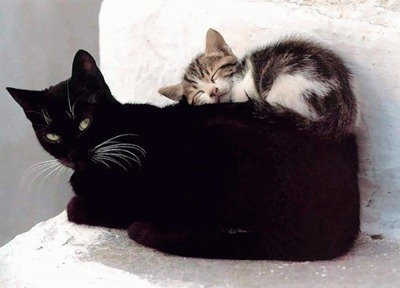 Что тебе снится, милый котенок?