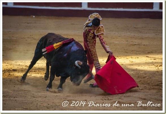 Toros 2014 (1)-23
