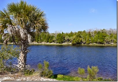 bev_hills_withlacoochee_bay_trail_scenery
