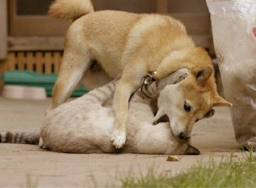Very Cute Dogs Cats Together Moments Animals Nuttytimes Page 13