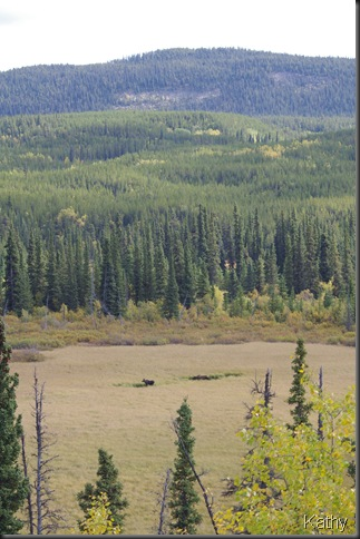 Moose down there