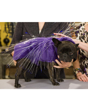 Here Francesca models a crafty illuminated porcupine costume for Martha's show.